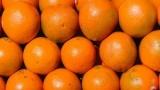 السودان تمنع دخول البرتقال المصري.. وتتلفه على الحدود .. لهذا السبب !!